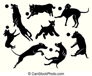 jókedvű, állhatatos, kutyák, ugrás