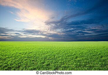 kék ég, mező, zöld, alatt, friss, fű