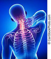 kék, anatómia, hím, fáj, nyak