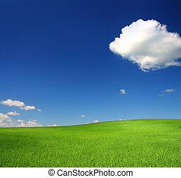 kék, búza, ég, zöld hegy, alatt