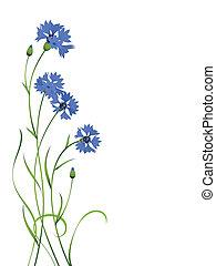 kék, búzavirág, elszigetelt, csokor, motívum