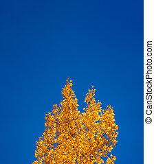 kék, befest, világos, ősz, alatt, ég