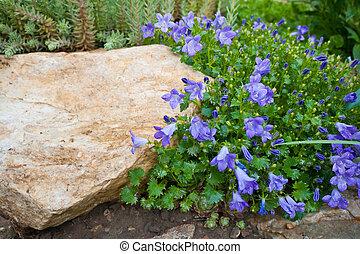 kék, berendezés, harangvirág, kő