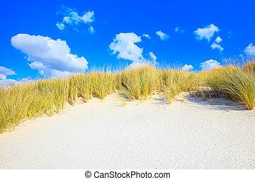 kék, dűnék, ég, homok, fehér, fű, tengerpart