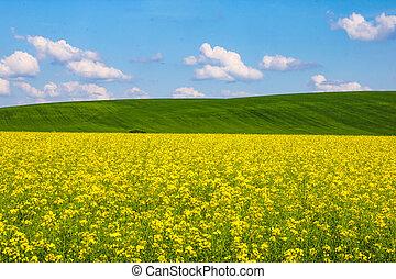 kék, dombok, ég, sárga, clouds., zöld, rapeseed, mező, fehér, kilátás