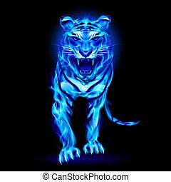 kék, elbocsát, tiger.