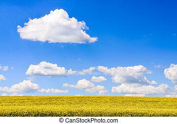kék, elhomályosul, ég, sárga terep, white virág