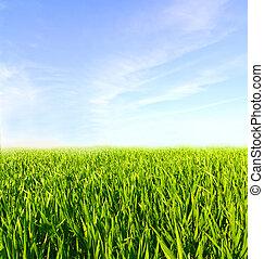 kék, elhomályosul, kaszáló, ég, zöld fű