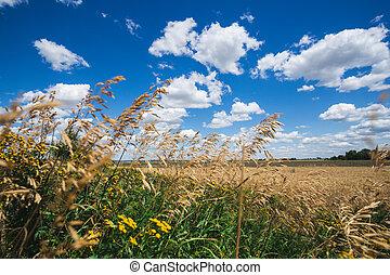 kék, fényes, fű, ég, ellen
