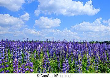 kék, farkaszszerű, ég terep, alatt, menstruáció
