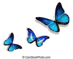 kék, fehér, pillangók, három, elszigetelt