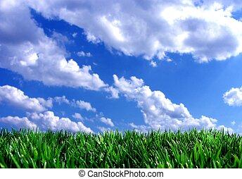 kék, friss, ég, zöld, fű