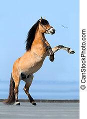 kék, háttér., ló, reared