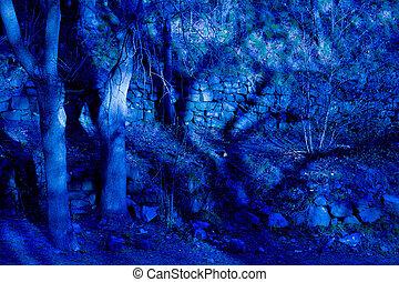 kék, képzelet, félhomály, erdő
