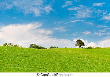 kék, kaszáló, ég, bitófák, zöld, felhős, horizont