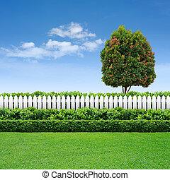 kék, kerítés, ég, fa, fehér, sövénykerítés