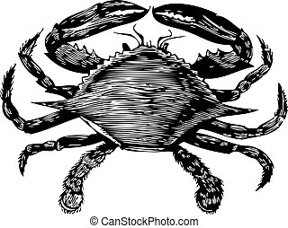 kék, metszés, (callinectes, hastatus), tengeri rák