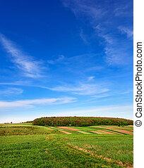 kék, mező, ég, alatt