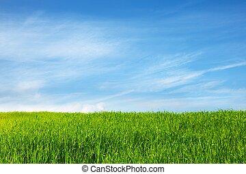 kék, mező, ég, fű