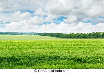 kék, mező, ég, zöld
