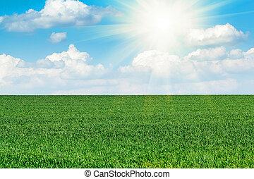 kék, nap, ég terep, zöld, alatt, friss, fű