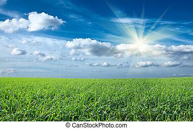 kék, nap, ég, zöld terep, napnyugta, alatt, friss, fű