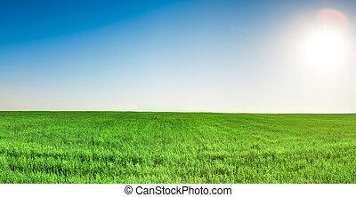 kék, panoráma, alatt, ég terep, nap, fű