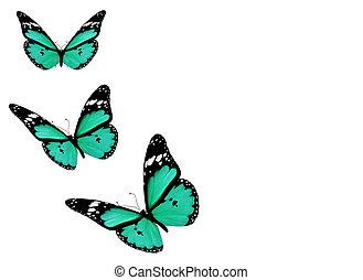 kék, pillangók, három, elszigetelt, háttér, fehér