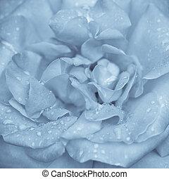 kék, rózsa, virág, víz letesz