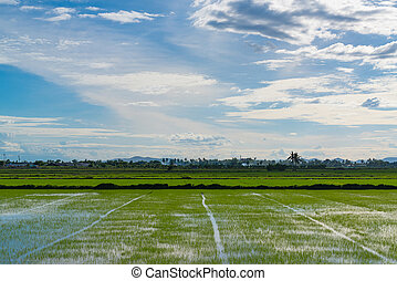 kék, rizs terep, ég, felhős, háttér., zöld, felhő, fű, táj