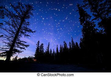 kék, sok, ég, csillogás, erdő, csillaggal díszít