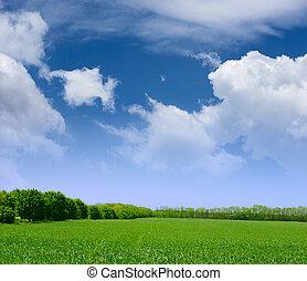 kék, széles, elhomályosul, ég, fű, mező, zöld erdő