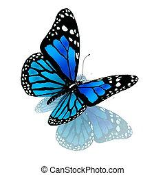 kék, szín, lepke, fehér