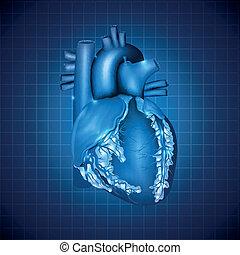 kék, szív, ábra, orvosi, tervezés, emberi, elvont