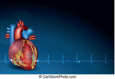 kék, szív, emberi, háttér