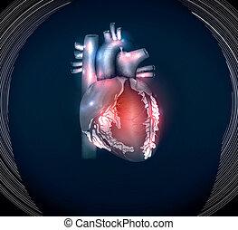 kék, szív, fényes, emberi, háttér