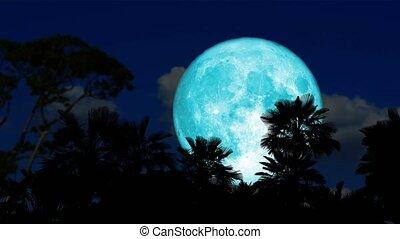 kék, szuper, idő, fa, múlás, hold, árnykép, éjszaka, emelkedik, hát, pálma, hódprém, felhő, ég, sötét
