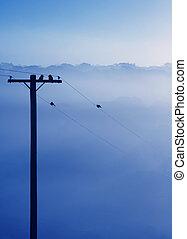 kék, tél, ködös, reggel