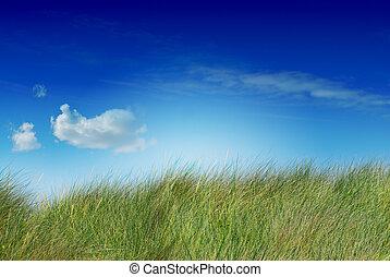 kék, telített, lejtő, kép, ég, egy, uncutted, zöld, magas fű, felhő, bal
