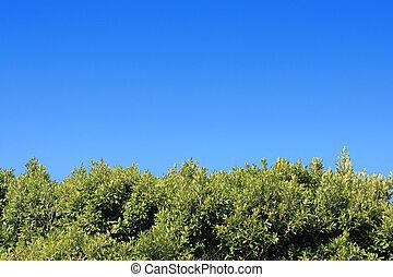 kék, tiszta égbolt, zöld foliage, alatt