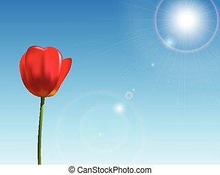 kék, tulipán, ég, piros háttér