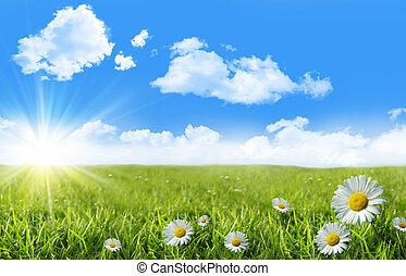 kék, vad fű, ég, óriási sajtkorongok