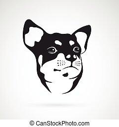 , kép, kutya, vektor, háttér, fehér