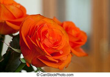 kép, narancs, feláll sűrű, egyes emelkedik