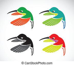 kép, vektor, white háttér, kolibri