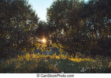 késő, eredet, sáv, erdő, napvilág