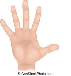 kéz, ábra
