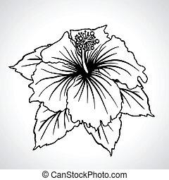 kínai, isolated., makro, fekete, rózsa, menstruáció