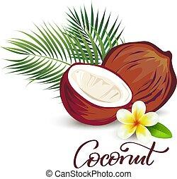 kókuszdió, virág, plumeria, ábra