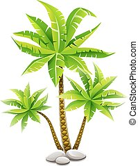 kókuszdió, zöld, bitófák, tropikus, zöld, pálma